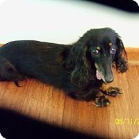 Adopt A Pet :: Jasmine - Davenport, IA