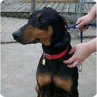 Adopt A Pet :: Gibson - New Richmond, OH