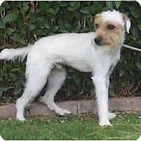 Adopt A Pet :: Tracy - Scottsdale, AZ