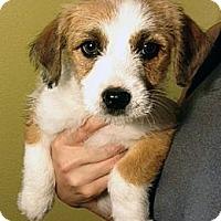 Adopt A Pet :: Suzie - Inglewood, CA