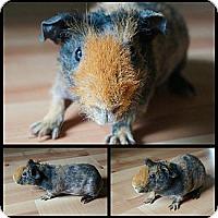 Adopt A Pet :: Buster - Brooklyn Park, MN