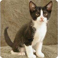 Adopt A Pet :: Alvin - Sacramento, CA