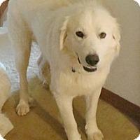 Adopt A Pet :: Marshall *Adopted - Tulsa, OK