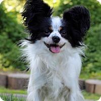 Adopt A Pet :: Cher - Port Washington, NY