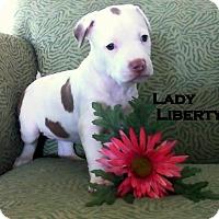 Adopt A Pet :: LADY LIBERTY - Higley, AZ