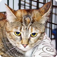 Adopt A Pet :: Alice - Longview, WA