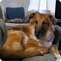 Adopt A Pet :: Toby Leigh - Alpharetta, GA