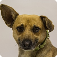 Adopt A Pet :: Luca - Mission Viejo, CA