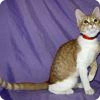 Adopt A Pet :: Dempsey - Powell, OH