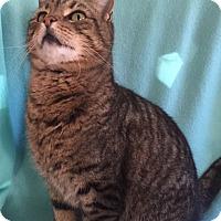 Adopt A Pet :: Hudson - Bloomsburg, PA