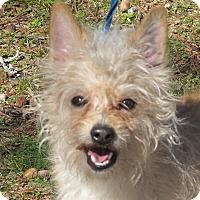 Adopt A Pet :: Brady 9 lbs - Plainfield, CT