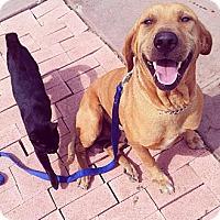 Adopt A Pet :: Rex - Honolulu, HI