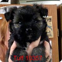 Adopt A Pet :: Tuff - Greencastle, NC