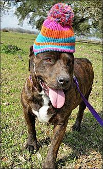 Terrier (Unknown Type, Medium)/Cardigan Welsh Corgi Mix Dog for adoption in Huntington, New York - Tiger Lily - N