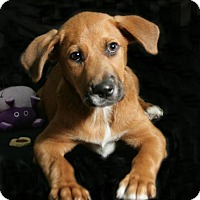 Adopt A Pet :: Fozzy - Lufkin, TX