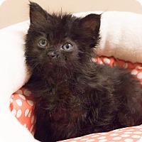 Adopt A Pet :: Lennon - Chicago, IL