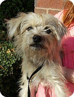 Terrier (Unknown Type, Medium) Mix Dog for adoption in Mount Pleasant, South Carolina - Widget