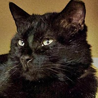 Adopt A Pet :: Mr. BC - Santa Fe, NM