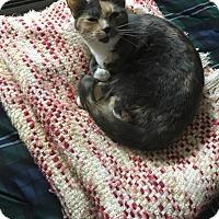 Adopt A Pet :: Ava - Berkley, MI