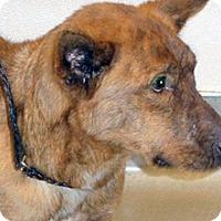 Adopt A Pet :: Shawnee - Wildomar, CA