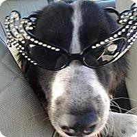 Adopt A Pet :: Monroe - Missouri City, TX