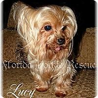 Adopt A Pet :: Lucy Lu - Palm City, FL