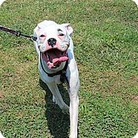 Adopt A Pet :: Sebastian - Foster, RI