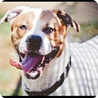 Adopt A Pet :: Bruno - South Park, PA
