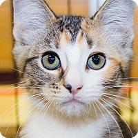 Adopt A Pet :: Hilde - Irvine, CA