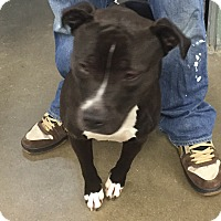 Adopt A Pet :: Delilah - Middletown, NY