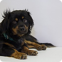 Adopt A Pet :: Bayou - Mission Viejo, CA