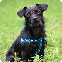 Adopt A Pet :: Bruno Mars - Austin, TX