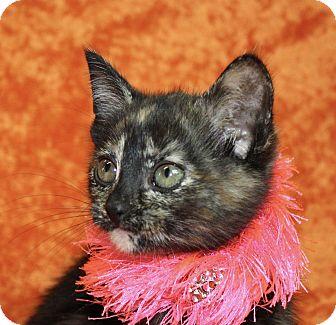 Domestic Shorthair Kitten for adoption in Jackson, Michigan - Tammy