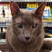 Adopt A Pet :: Ditto - Breinigsville, PA