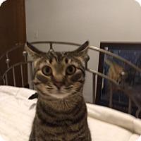 Adopt A Pet :: Macdonald - Byron Center, MI