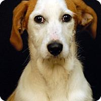 Adopt A Pet :: Gypsy - Newland, NC