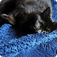 Adopt A Pet :: Panther - Baltimore, MD