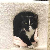 Adopt A Pet :: ALEX - Hampton Bays, NY
