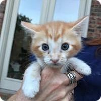 Adopt A Pet :: Floyd - McKinney, TX
