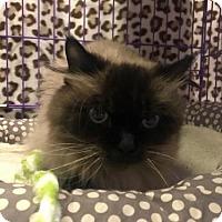 Adopt A Pet :: Jinxsy - Akron, OH