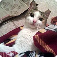 Adopt A Pet :: Blue - Alexandria, VA