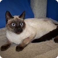 Adopt A Pet :: Genet - Colorado Springs, CO