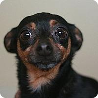 Adopt A Pet :: McKenzie - Canoga Park, CA