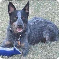 Adopt A Pet :: Asia - Gilbert, AZ