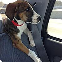 Adopt A Pet :: GYPSY - Inglewood, CA
