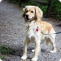 Adopt A Pet :: Brewster - Tinton Falls, NJ