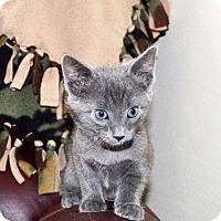 Adopt A Pet :: Oscar - Xenia, OH