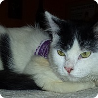 Adopt A Pet :: Carl - Edmond, OK