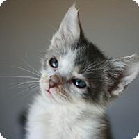 Adopt A Pet :: Spanky - Canoga Park, CA