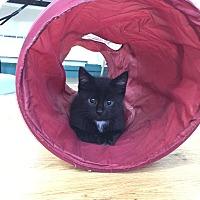 Adopt A Pet :: Marcos - Speonk, NY